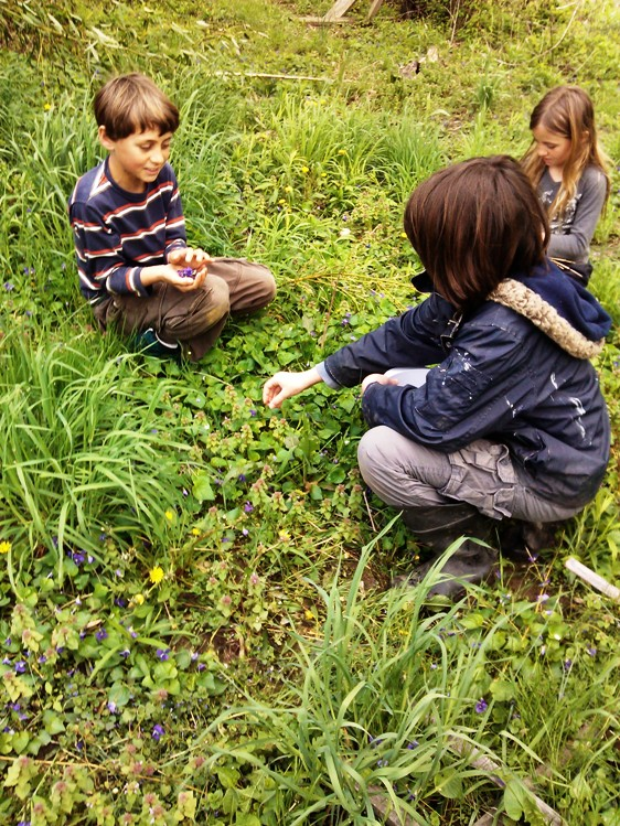Picking violets for our lunch salad
