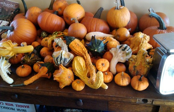 Pie pumpkins and gourds from local farmers at INgredients.