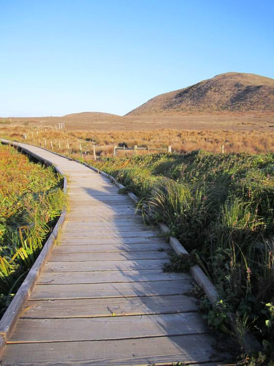Path to Abbott's Lagoon, Point Reyes National Seashore