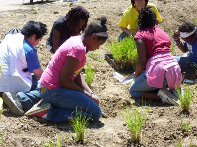 Cold Spring students dig in, planting 400 plugs of forbs and sedges