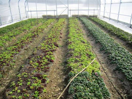 Freedom Valley Farm's high tunnel beds.