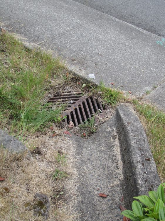 Ever wonder where the runoff disappears to when it enters a drain like this?