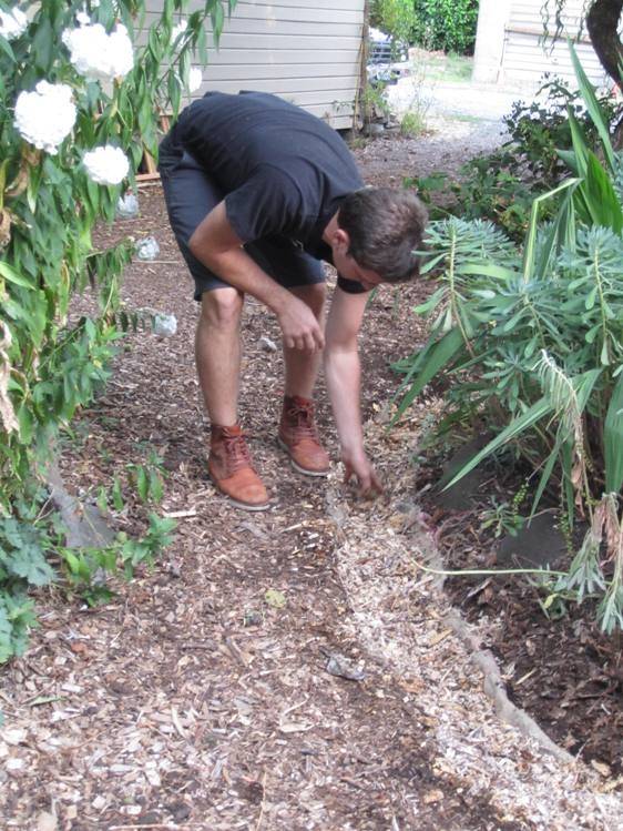 Spreading inoculated wood chips