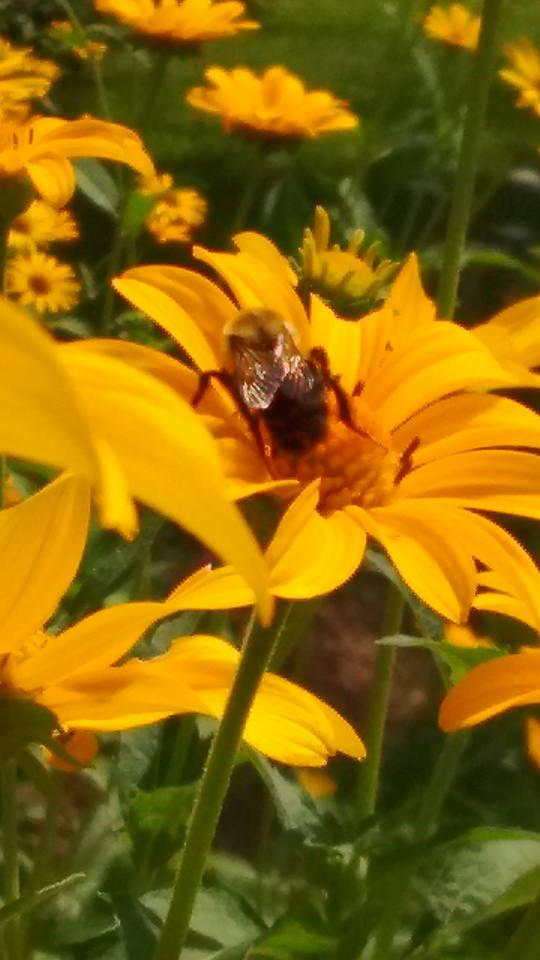 Friendly pollinator