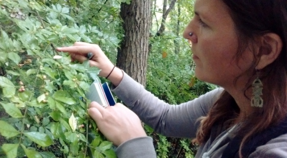 Maria inspecting winged euonymus